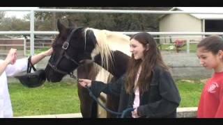 My new horse Lightning