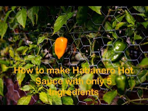 How to Make Habanero Hot Sauce!