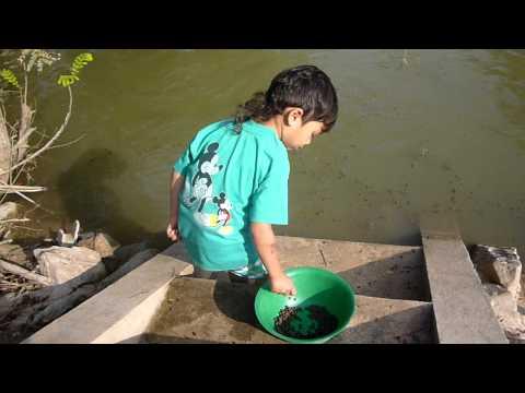 My Fish Farm in Thailand 2011 # 1