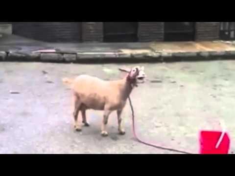 Skrillex - Bangarang (Goat Remix)