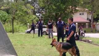 Malaysian K9 Unit From Pdrm Visit And Demonstration