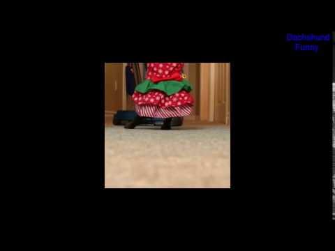 Dachshund Funny Mrs  Doubtfire Dog Vine   by Crusoe Dachshund