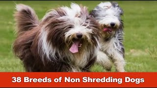 38 Breeds Of Non Shredding Dogs