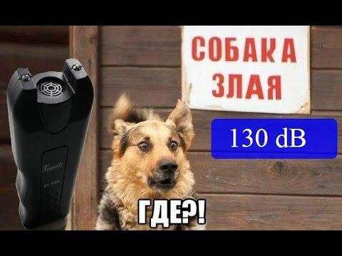 Вопрос: Какие эффективные средства лучше отпугивают бродячих собак Советы?