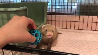 http://www.ferret-world.jp フェレットワールド 中野店 東京都 中野区 ...