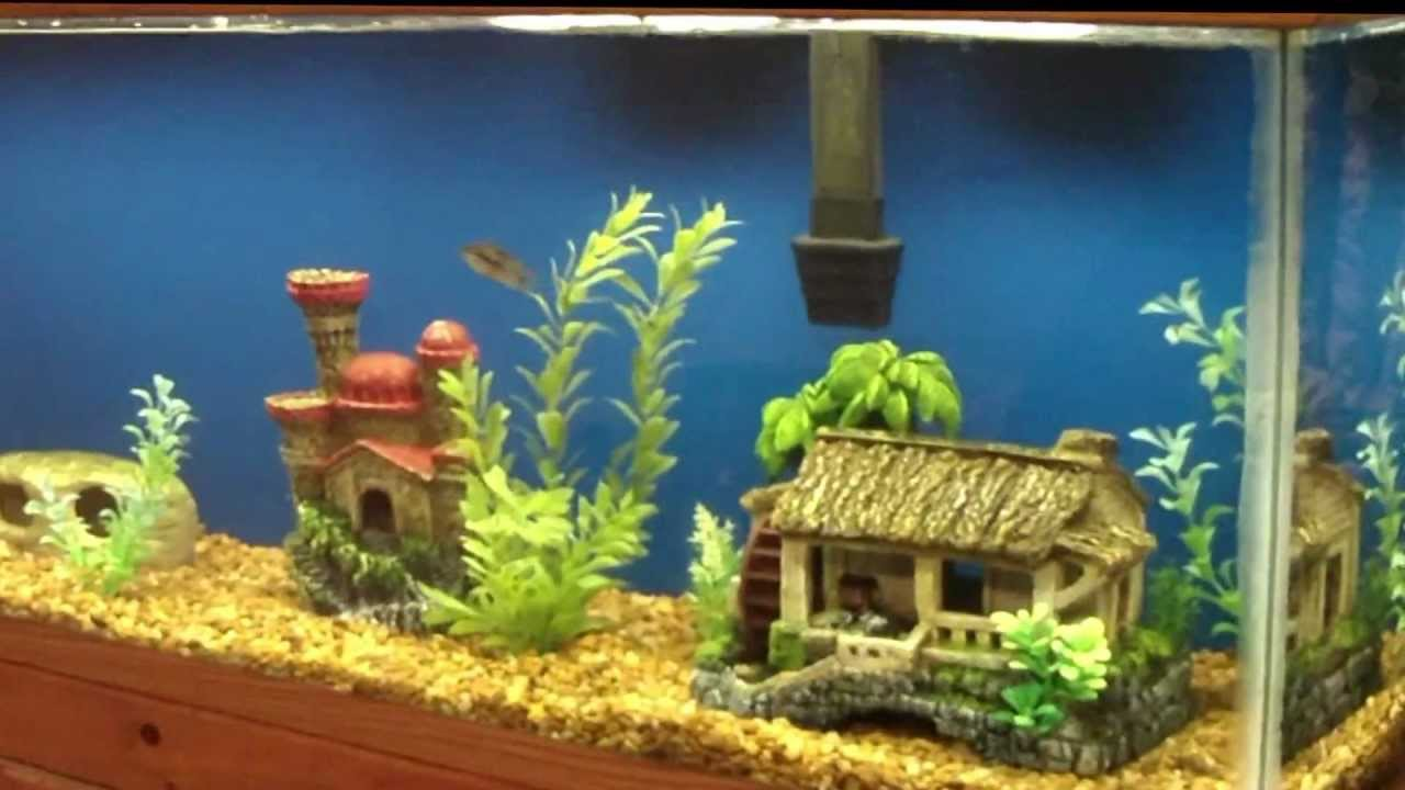 Fish tank painting - How To Diy Aquarium Background Painting