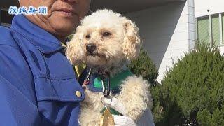 県警の嘱託警察犬にトイプードルのアンズ(雌、3歳)が選ばれ、15日、...
