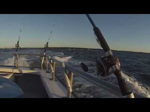 Charter Fishing for BIG Bluefish and Black Sea Bass