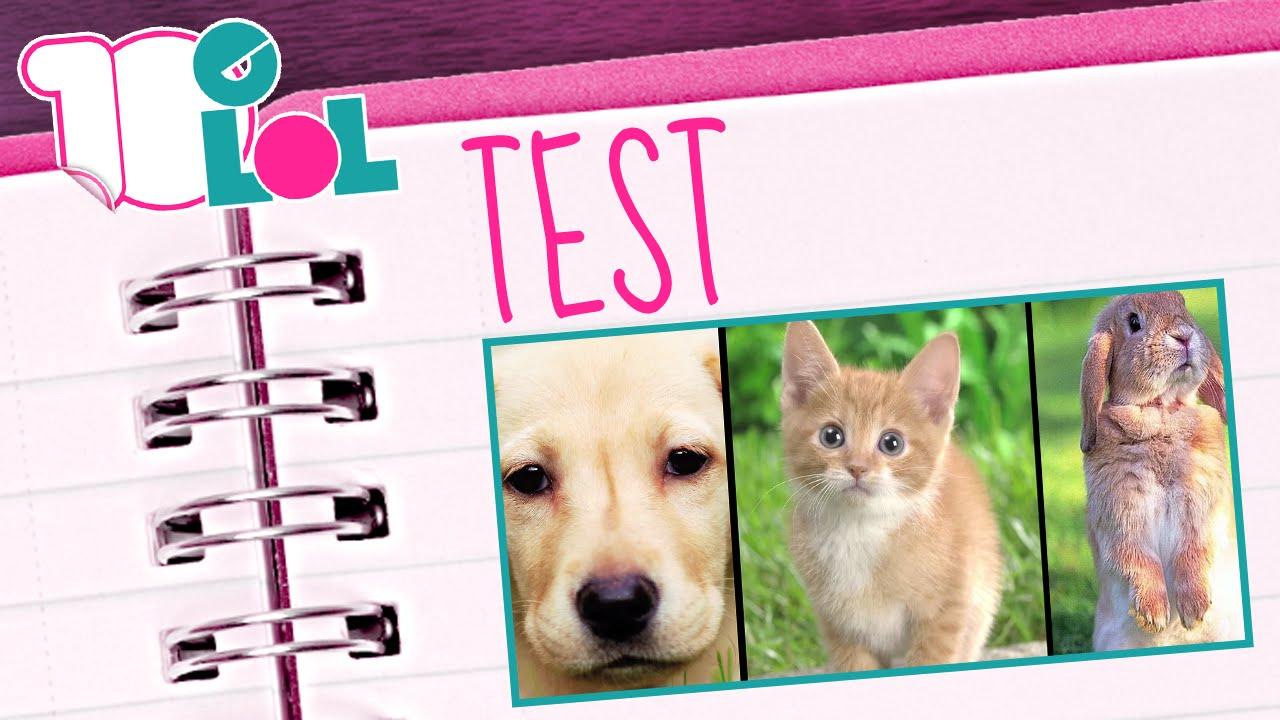 Quale animale domestico fa per te test youtube for Test quale animale sei