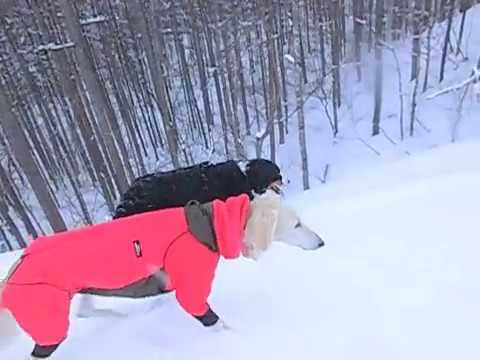 雪山登山犬♪(Saluki・Irish Setter・Bernese Mountain Dog・Miniature Schnauzer)