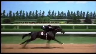 The Black Stallion final race