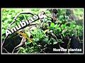 Nuevas plantas para el 30 litros: Anubias mini, Cryptocoryne Parva y Cuba || AquaTips