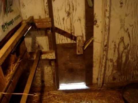 Chuxaway Chicken Door Opening Avi Doovi