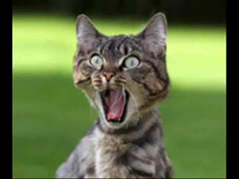 Chat loiret