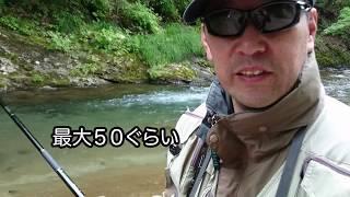 6月29日美笛川(千歳市)で渓流釣り