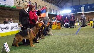 BEST IN SHOW - 1 группа пород (большие собаки). Чемпионат Германии. Выставка «Планета собак 2017»