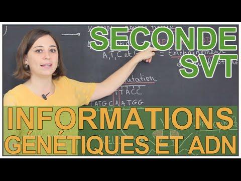 L'ADN et les informations génétiques - SVT Seconde - Les Bons Profs