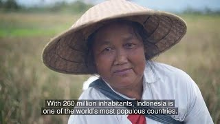 Plant Breeding in Indonesia - The International Atomic Energy Agency (IAEA)