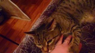 Кот Ричи поцарапал руки...