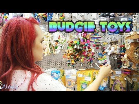 Budgie: Playing It Safe With Bird Toys