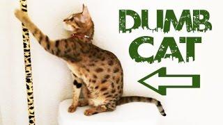 DUMBEST CAT