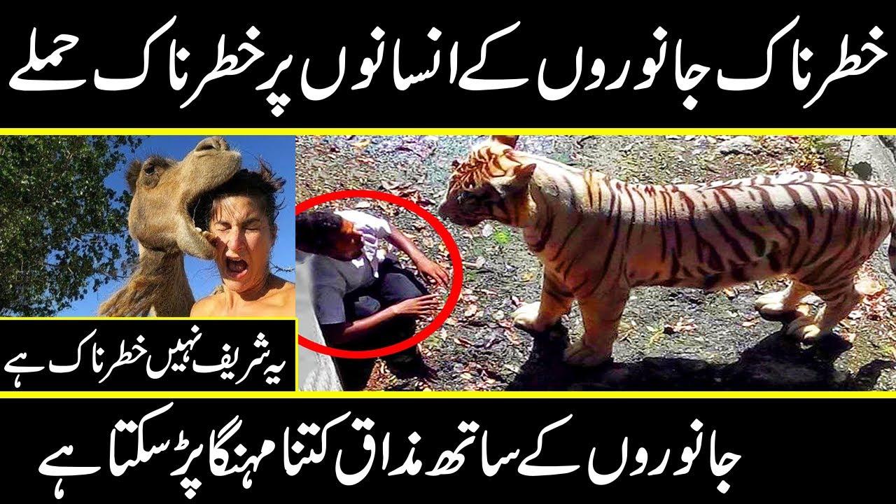 Most shocking animals atack on people in urdu hindi | Urdu Cover