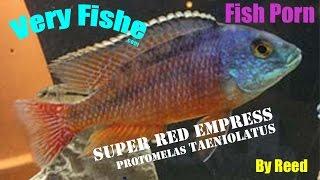 Super Red Empress