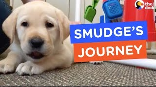 A Guide Dog's Life: Smudge's Journey Ep. 1 | The Dodo thumbnail