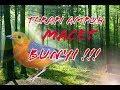 Terapi Burung Macet Bunyi Gunakan Pada Malam Hari Sewaktu Burung Istirahat  Mp3 - Mp4 Download