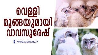 Seven Barn Owls rescued | Vava Suresh | Kaumudy TV
