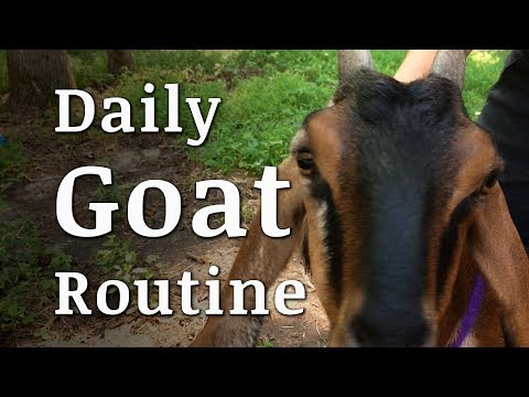 Our Daily GOAT Routine - Collaboration