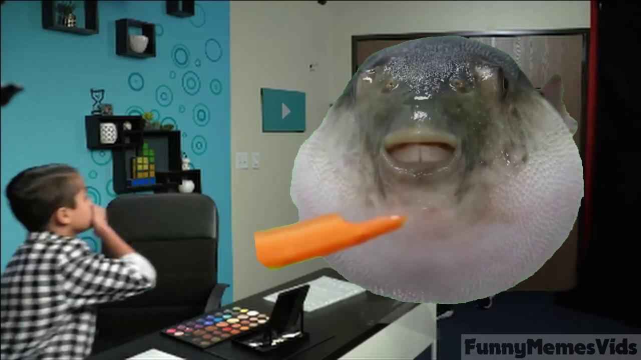 PEOPLE REACT TO PUFFER FISH MEME - YouTube
