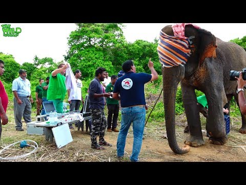 Expert Aid From Generous Germany To Save A Wild Elephant