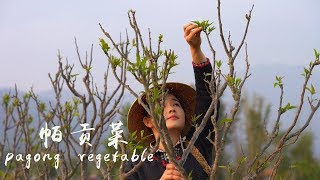 Put Spring in your belly——Pagong vegetable
