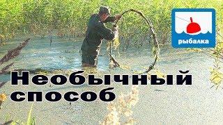 Необычный способ ловли на удочку в ряске_отчёт о рыбалке