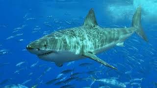 Shark Swims in Houston Streets ?