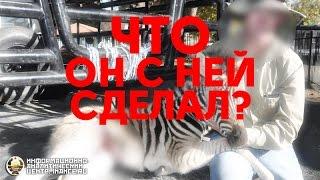 ШОК: Путин тряхнул зебру? (ФОТО) (ИАЦ)
