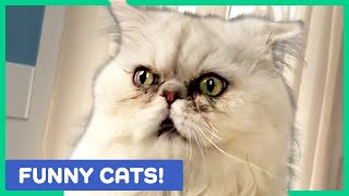 CAT VIDEOS TO MAKE YOU LAUGH! Funny and Cute Cats