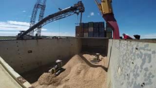 mv hollandia loading woodchips in sheet harbour