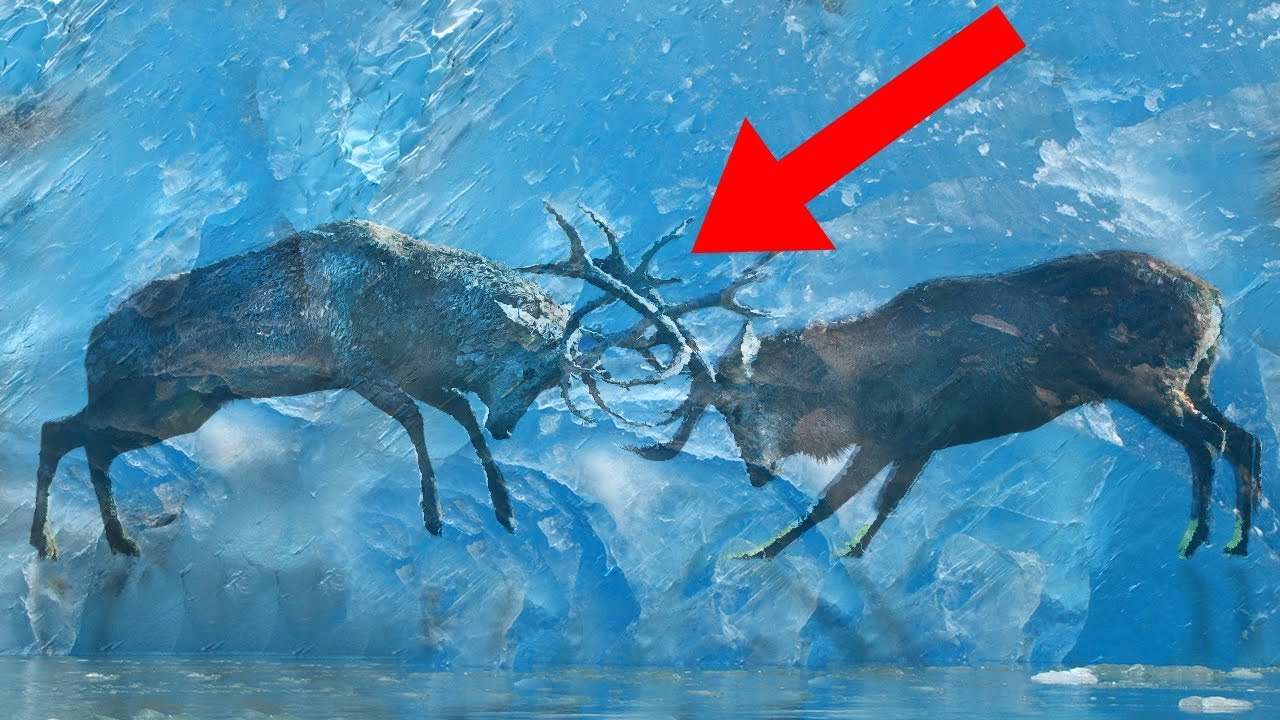 Animals Discovered FROZEN In Ice!