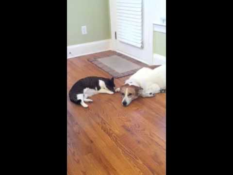 no pee spray for cats