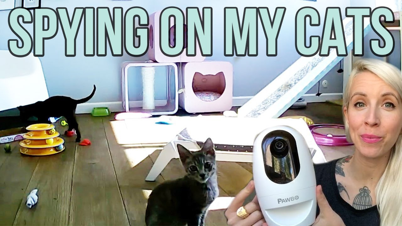 spying-on-my-cats-kittens-with-a-pawbo