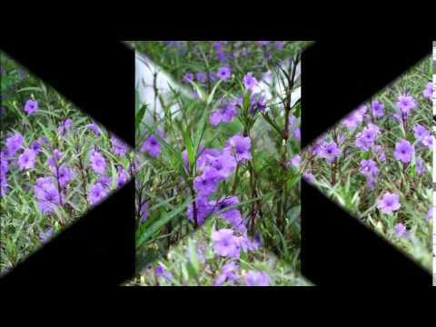 ครูแสง : เรียนลัดถ่ายภาพ 9 ถ่ายภาพดอกไม้ไทย - Thai Flowers Movie 3