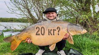 Карп на 20 кг в Германии и куча Сазанов в Южной Корее Рыбалка 2020 Весна
