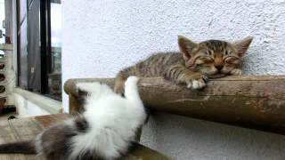 Sleeping Cat Annoyed By Hyper Cat