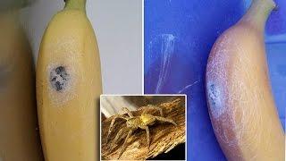 إذا تناولت هذا الموز.. ستموت خلال ساعتين !