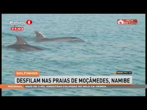 Golfinhos desfilam nas praias de Moçâmedes, Namibe