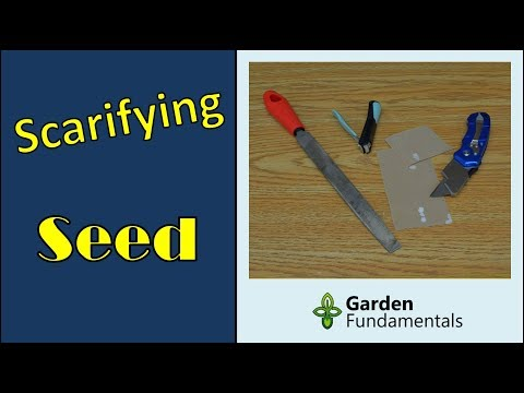 Seed Scarification Speeds up Germination (compare methods) from YouTube · Duration:  6 minutes 45 seconds