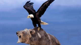 ОРЕЛ ПРОТИВ МЕДВЕДЯ??? Эти Битвы Животных Побили Все Рекорды!
