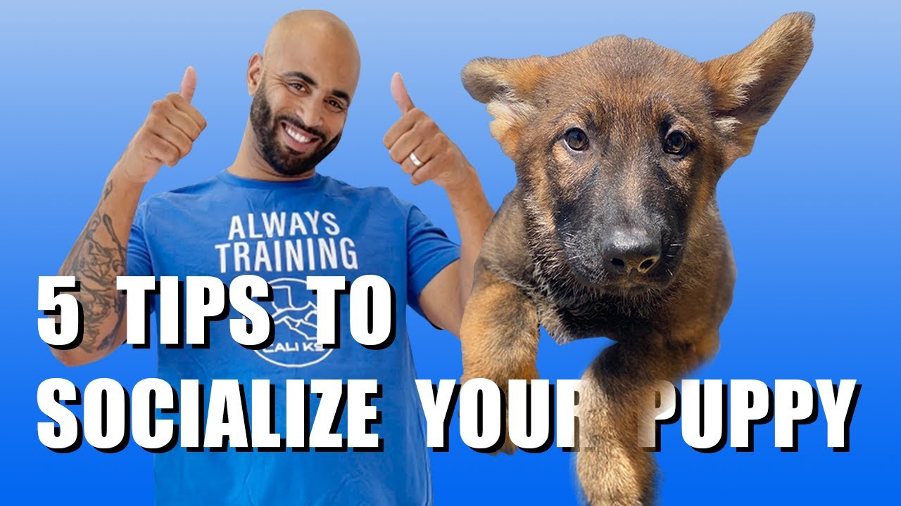 5 Puppy Training Tips For Socializing Your Puppy